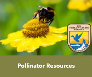 Pollinator Resources